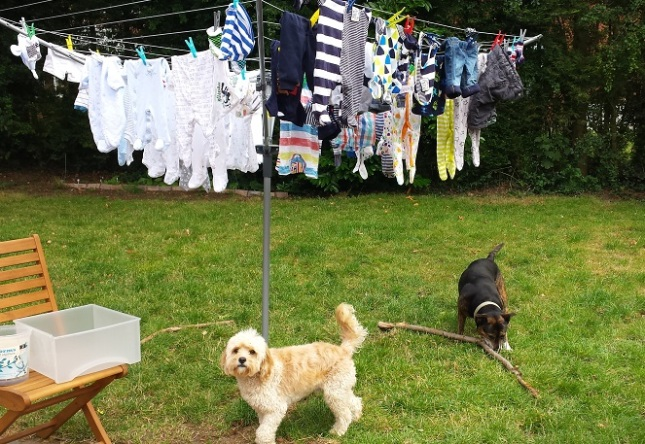 ...just some of the washing - and our naughty dogs...